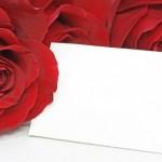 Ruusu1